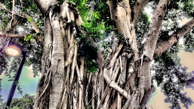 Parking lot Mangrove