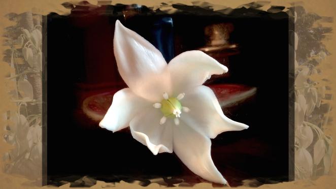 yucca blossom