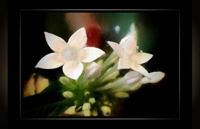 penta white.jpg