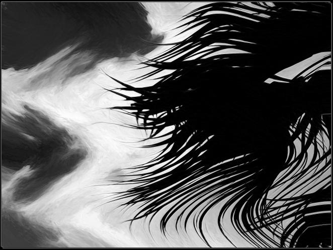 palm wind c.jpg