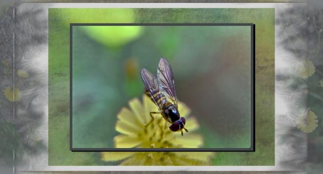 not a bee.jpg